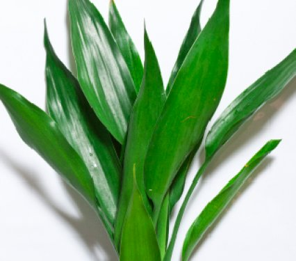 House Plants From A Dish Garden Plant By Leaf Identify Identifying Tropical  4f2708469170bjpg