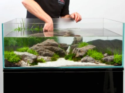 A thoroughly modern aquascape — Practical Fishkeeping Magazine