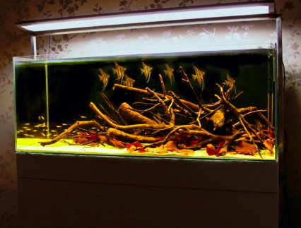 How to set up an amazon themed aquarium practical for Amazon fish tank