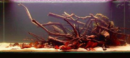How To Set Up An Amazon Themed Aquarium Practical Fishkeeping Magazine