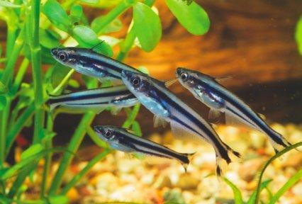 The Secret To Setting Up A Better River Aquarium Practical