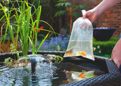 How To Build A Pond In Less Than One Hour Practical