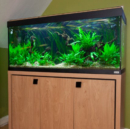How To Set Up A Temperate Tank That Looks Tropical Practical