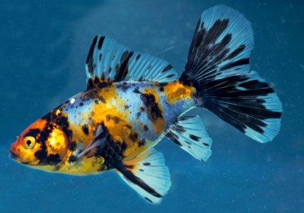 5d7ec704a12b Features — Practical Fishkeeping Magazine