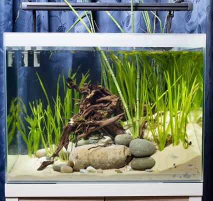 Energetic Aquarium Extra Long Reach Straight Tweezers 45cm Quality Heavyweight Algae Fish & Aquariums