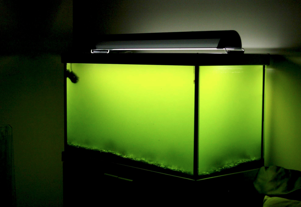 How to win the algae battle in your aquarium practical for What causes algae in fish tanks