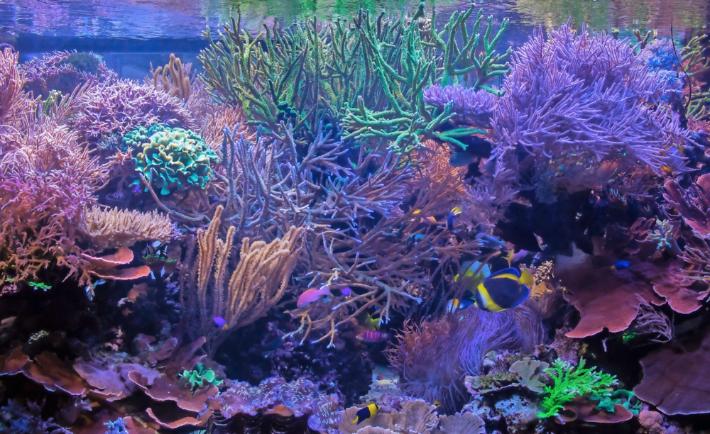 The sheer depth of the aquarium adds to the illusion that you're underwater on a coral reef.