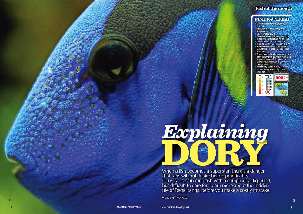 Dory is a fascinating fish with a complex background, but difficult to care for. Learn more about the hidden life of Regal tangs before you make a costly mistake.