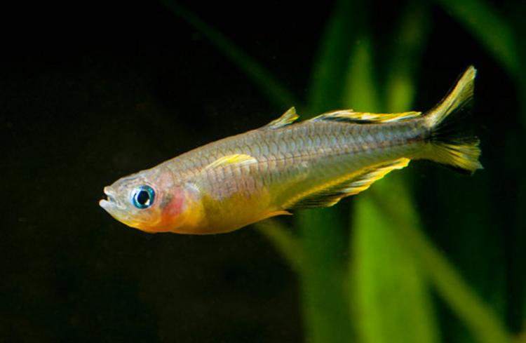 How Do I Worm My Fish Safely Practical Fishkeeping Magazine