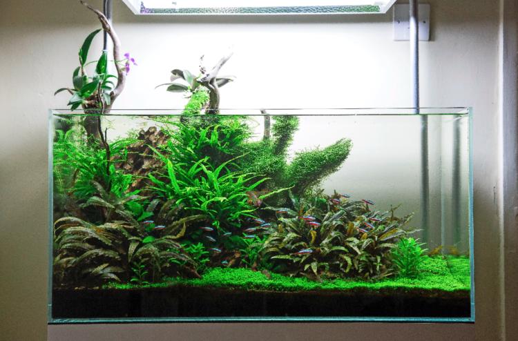 your tanks kris oddy practical fishkeeping magazine