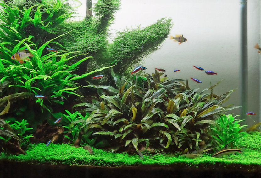 This is Kris' aquarium just one year after setting it up.