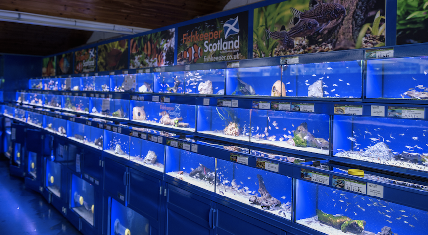 The new Fishkeeper Scotland store in Melville, Edinburgh, carries some more unusual fish species, some of which have never been seen in Scotland until now.