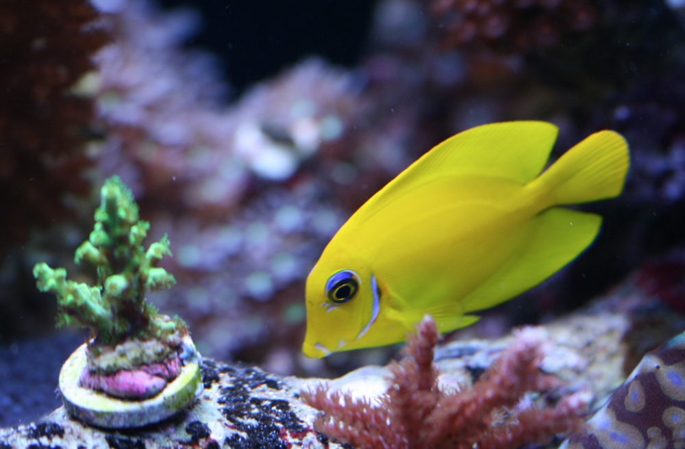 Aqualush stocks a wide choice of marine fish and corals, as well as tropicals and reptiles.