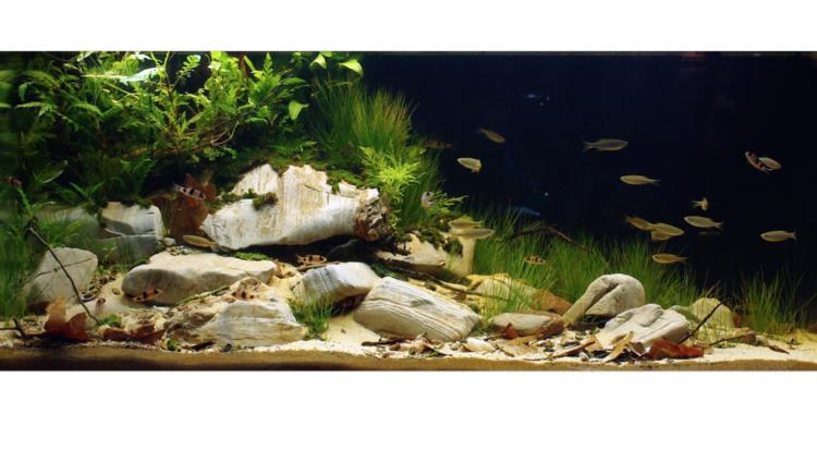 Aquarium Design | Enter The Biotope Aquarium Design Contest Practical Fishkeeping