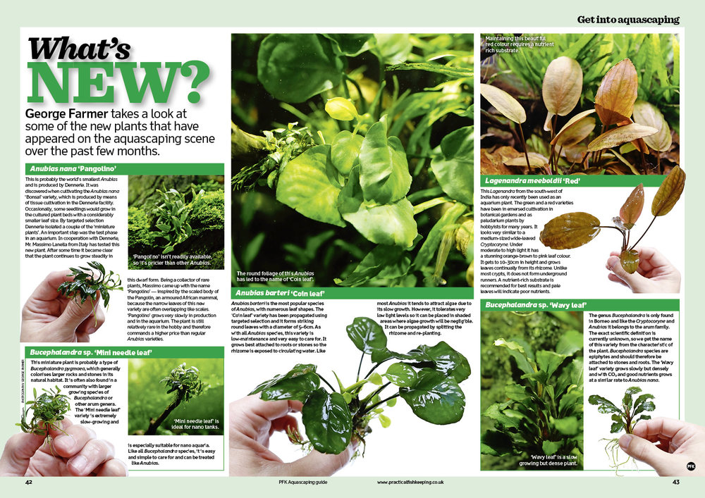 George Farmer takes a look at new plants in our aquascaping guide.