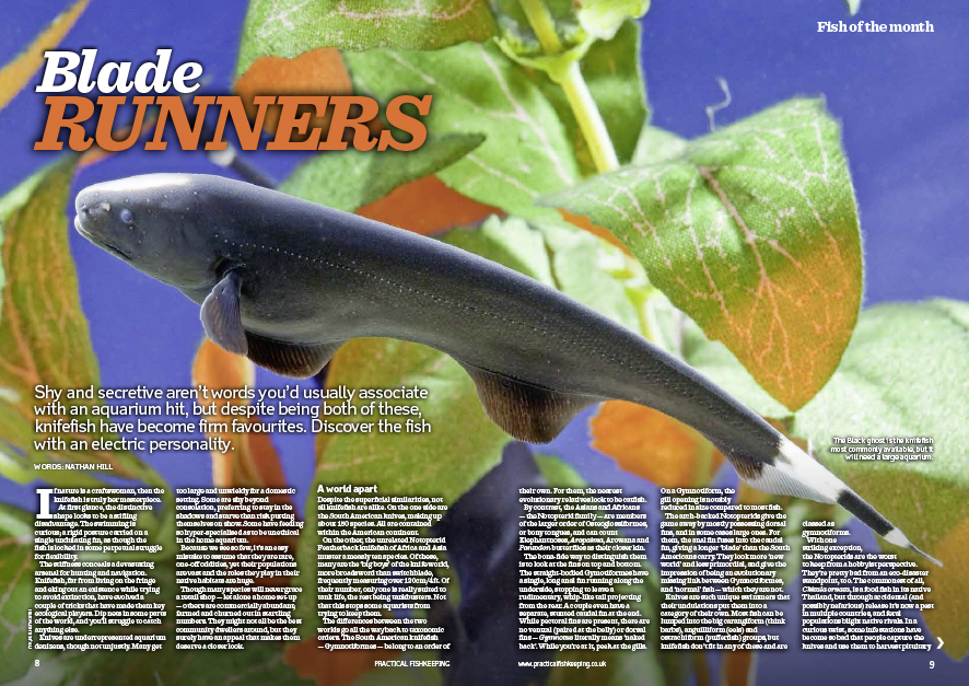 Discover the bizarre knifefish.