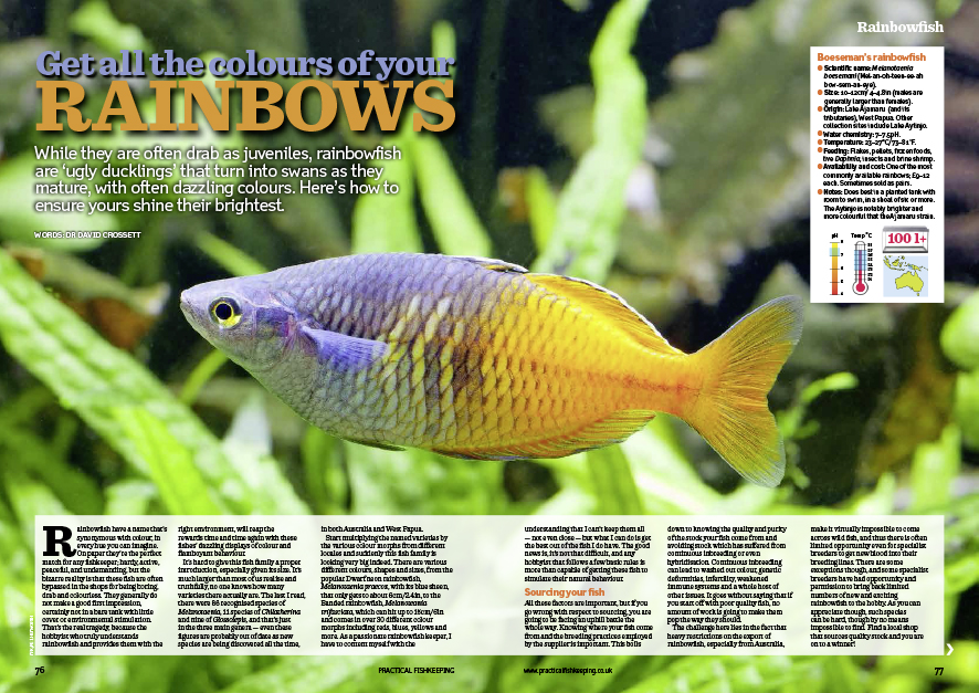 And meet our cover star, the Rainbowfish.