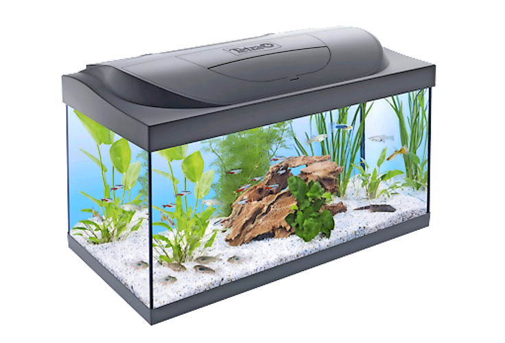 See how your chosen aquarium will fit into your home before you buy it, with Tetra's new app.