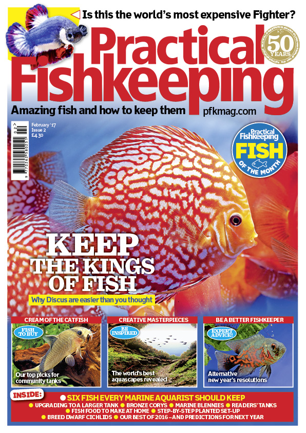 Our February issue offers you a packed selection. Find out why keeping Discus is easier than you thought. Plus, alternative new year's resolutions, the world's best aquascapes, and our top picks of the community catfish currently available in the shops.