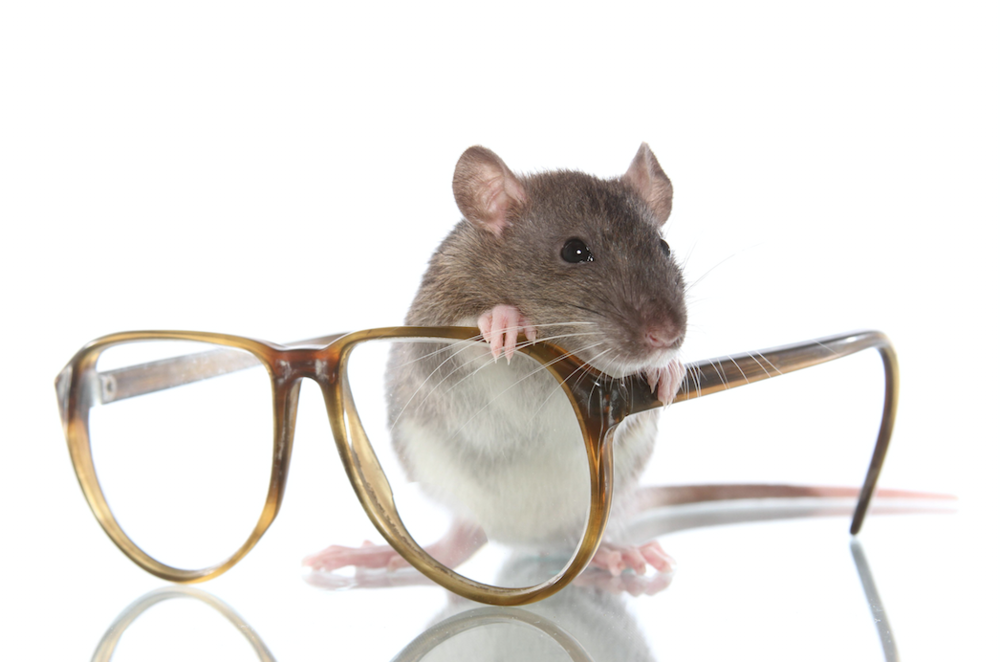 Brits warned to prepare for an invasion of rats in their homes as ...