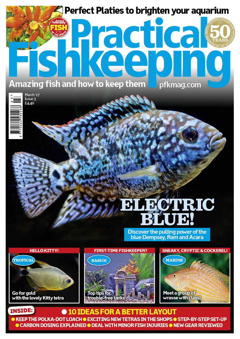 Our March 2017 issue is packed full of inspiration. We suggest perfect platies for your aquarium. Discover the pulling power of the blue Dempsey, Ram and Acara. Meet a group of wrasse with class and offer top tips to first-time fishkeepers.
