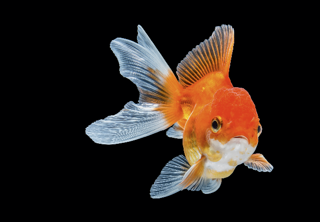 Could your fish be the next big television celebrity?