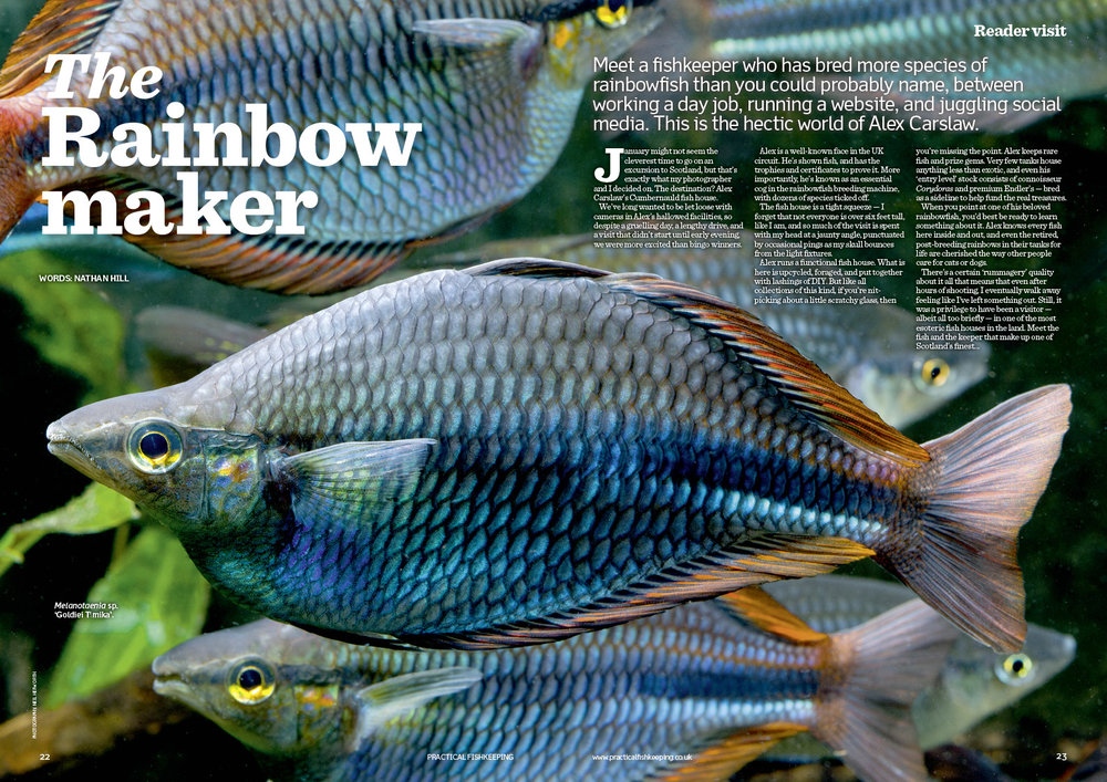 Learn some top tips from a rainbowfish expert.