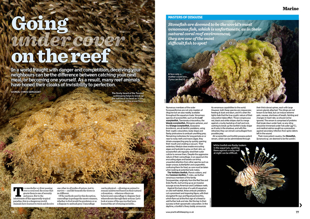The reef animals that have become masters of invisibility.
