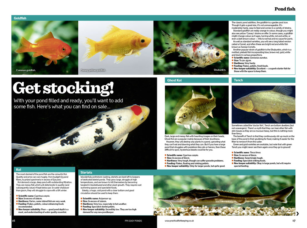 Our free Easy Pond supplement offers expert advice on the fish to stock.