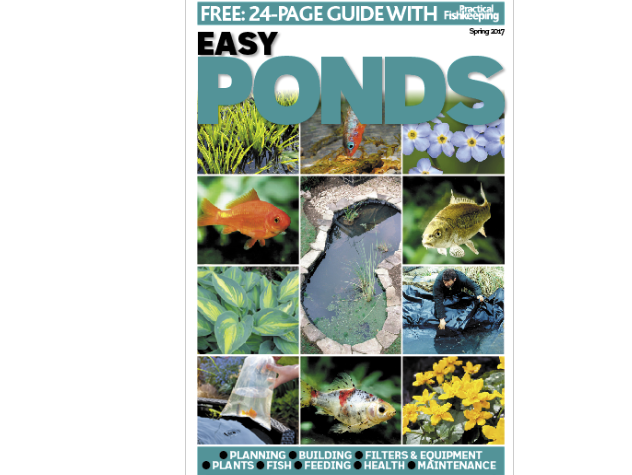 There's a FREE guide to pond building with the Spring issue of Practical Fishkeeping.