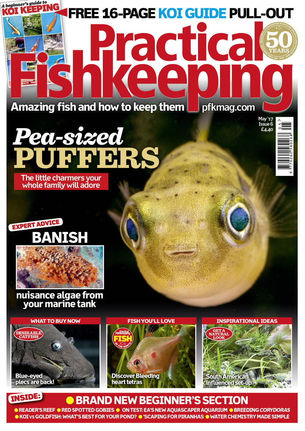Our lovely May 2017 issue features a pull-out 16-page beginner's guide to Koi keeping. We introduce pea-sized puffers, the little charmers your whole family will adore. Get expert advice to banish nuisance algae from your marine tank, discover new fish in the shops and be inspired by our readers' tanks. All this and loads more in the packed May issue.