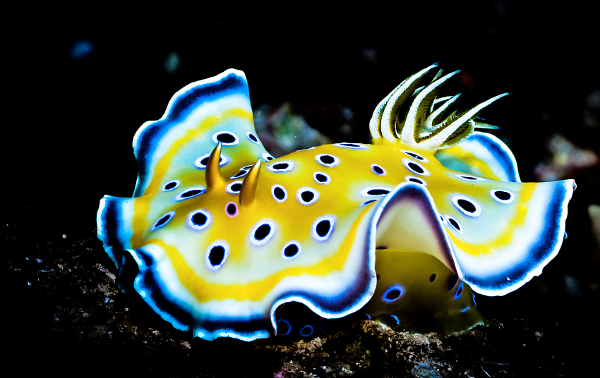 If food manufacturers crack the diet of difficult nudibranchs, they could be one of the next 'big things' in the hobby.