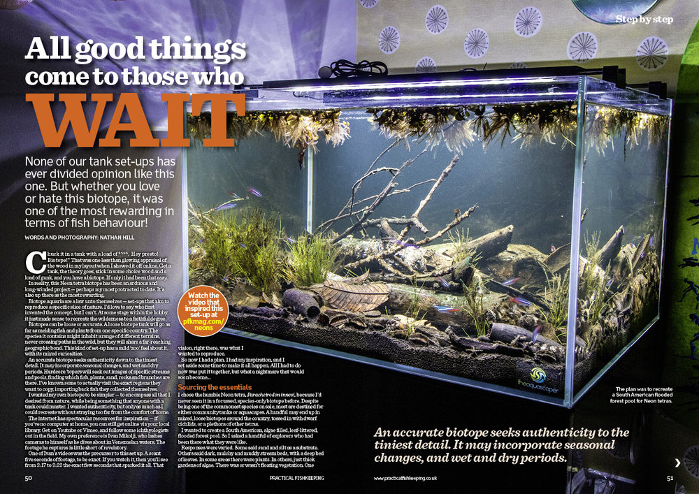 Read how Nathan Hill created an authentic biotope which unlocked something feral in his Neons.