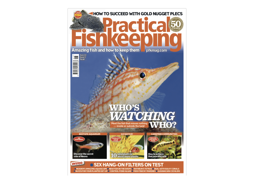 Don't miss the June issue of Practical Fishkeeping magazine.