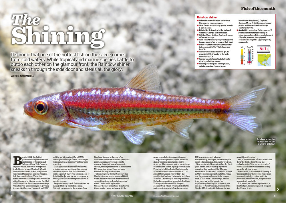 Nathan Hill chooses the Rainbow Shiner as the Fish of the Month.