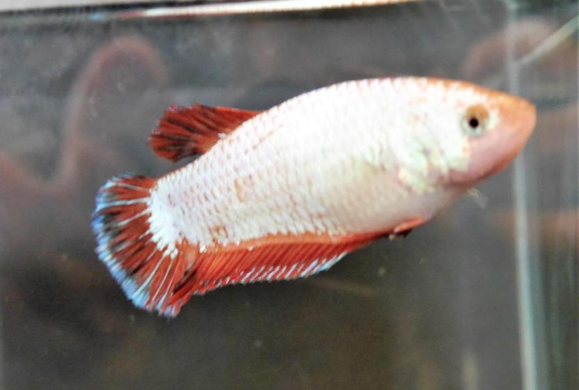 Harvey's winning fish.