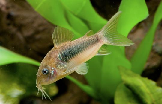 Features Practical Fishkeeping Magazine