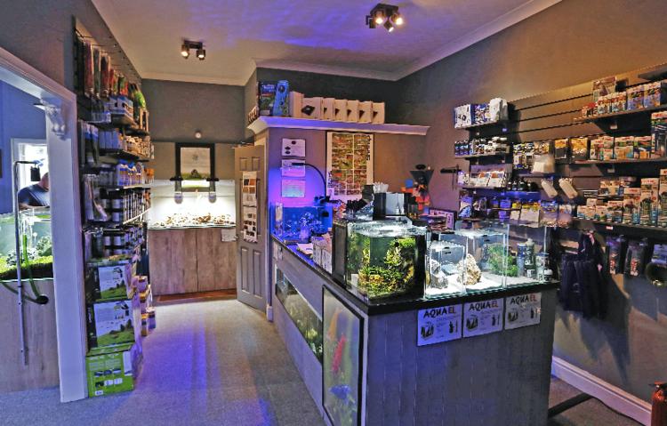 ba41d6e1fd9530 Top of the shops! — Practical Fishkeeping Magazine