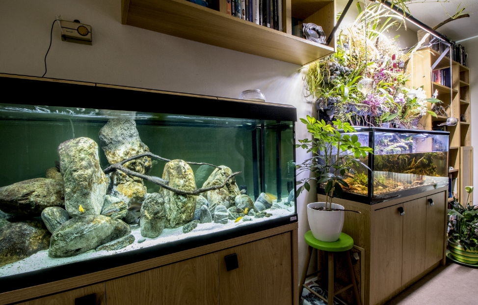 Two continents in one room: Steven's Borneo biotope sits alongside an African set-up.