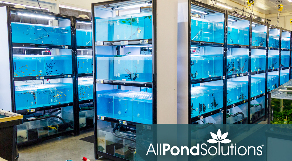 All Pond Solutions job role thumbnail-main image.jpg