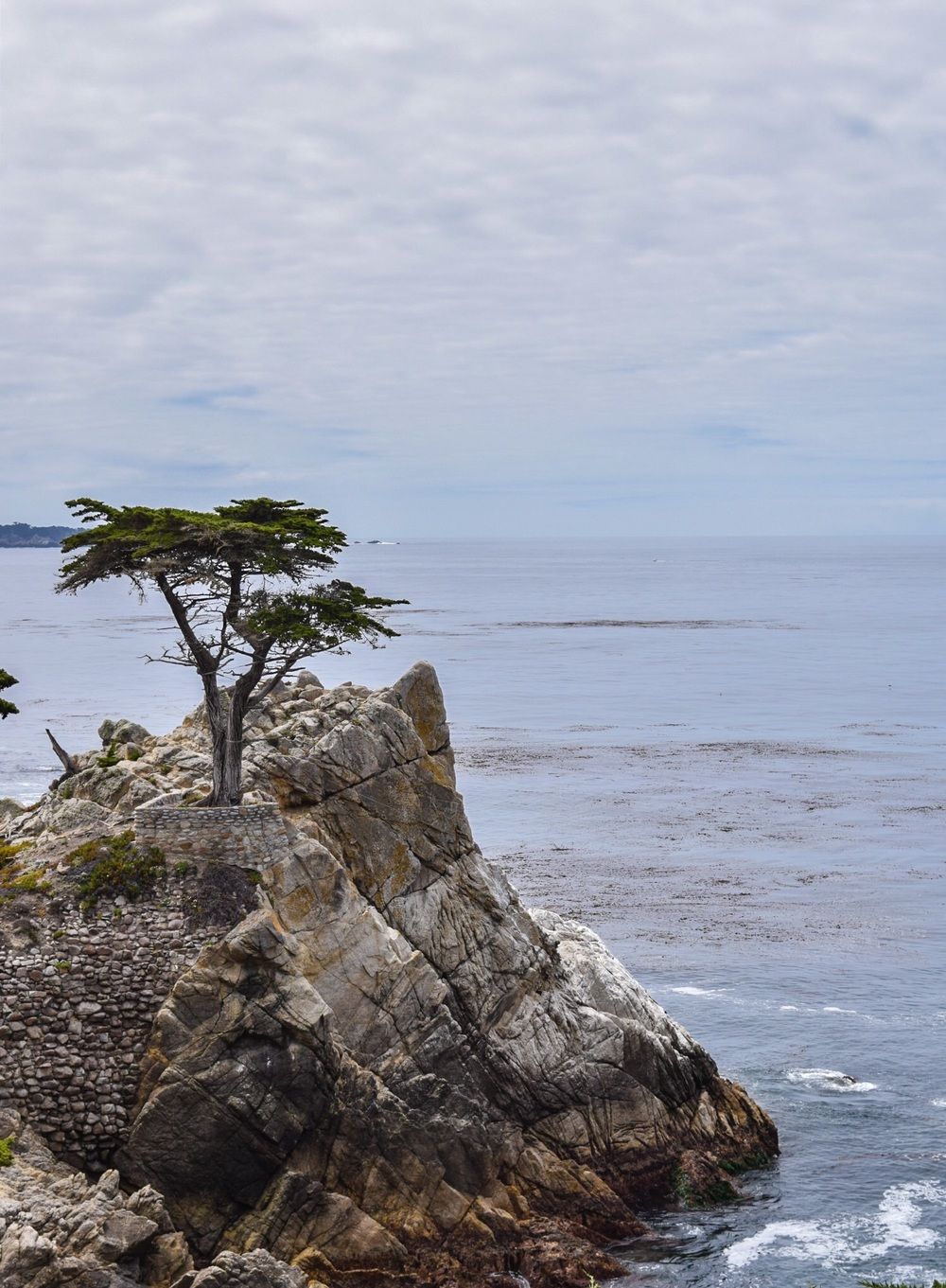 Pebble Beach - The Lone Cypress, more than 250 years old and the only tree in the world that is trademarked.