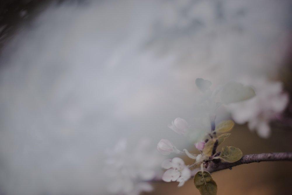 A Paler Fog