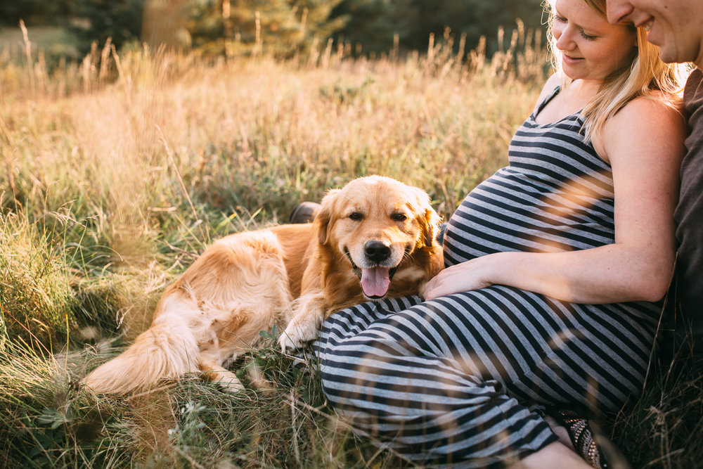 golden retriever dog sitting with pregnant mother-to-be in grassy field at golden hour - Stouffville newborn photos