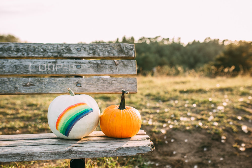 rainbow baby pumpkin on bench - uxbridge bump photography