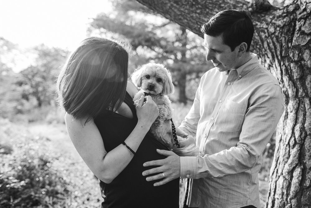 husband laughing with hands on wife's pregnant belly while she holds small dog in her arms -  Barrie Lifestyle Photos