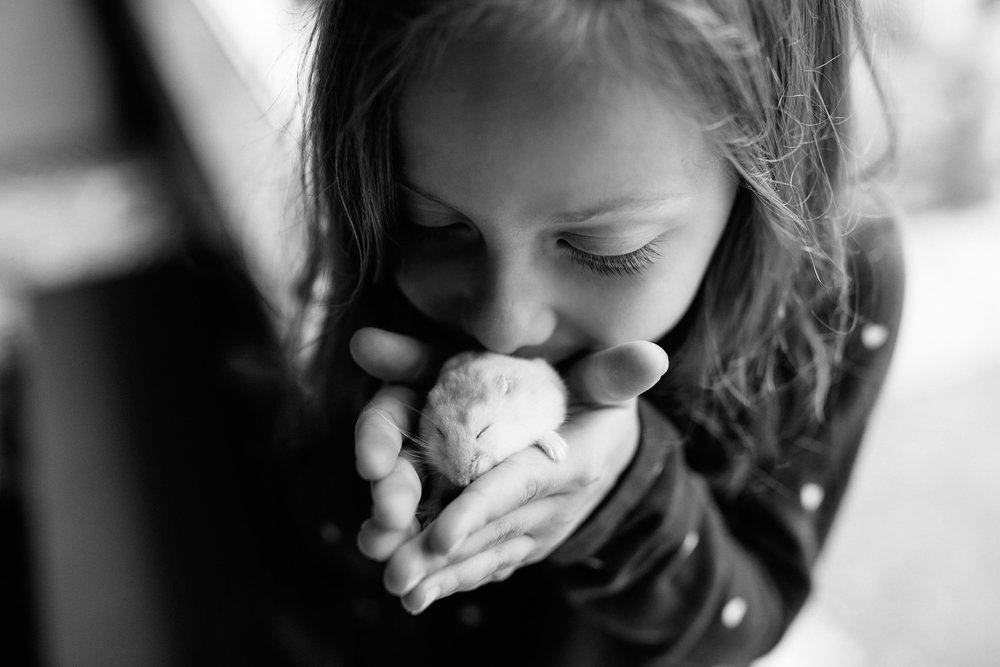 close up of 7 year old girl holding white hamster in both hands, kissing pet, both with eyes closed - Newmarket In-Home Photography