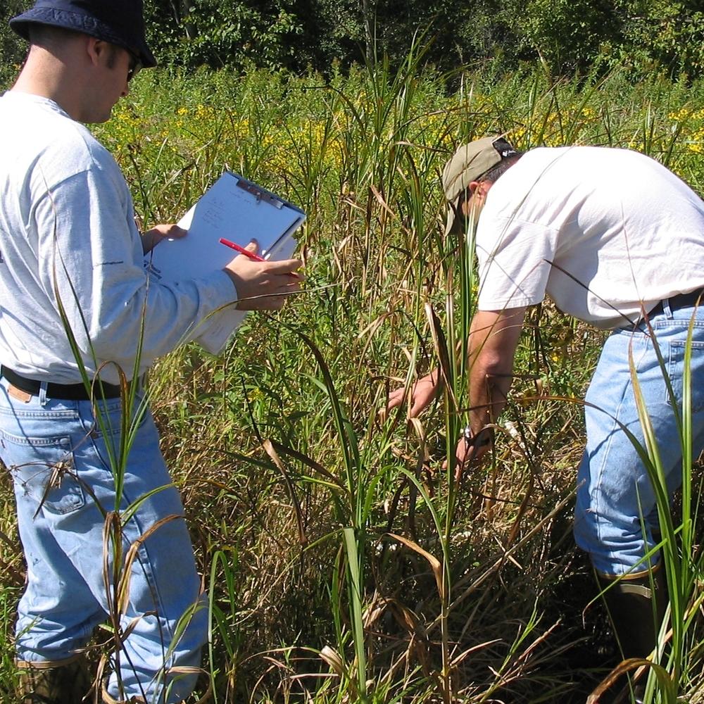 Wetland Monitoring.JPG