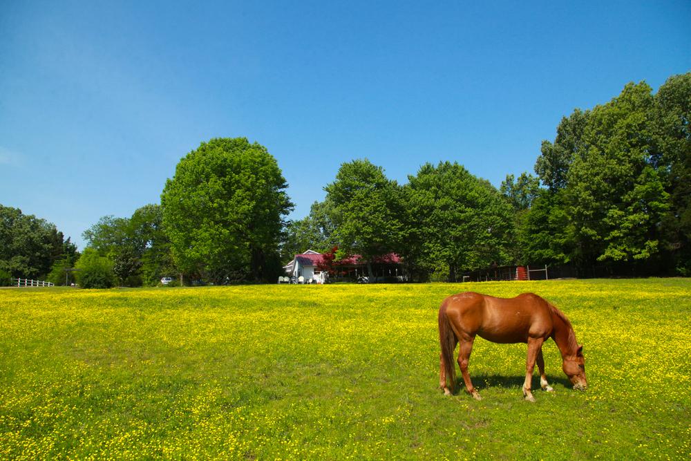DeSoto Horse.JPG