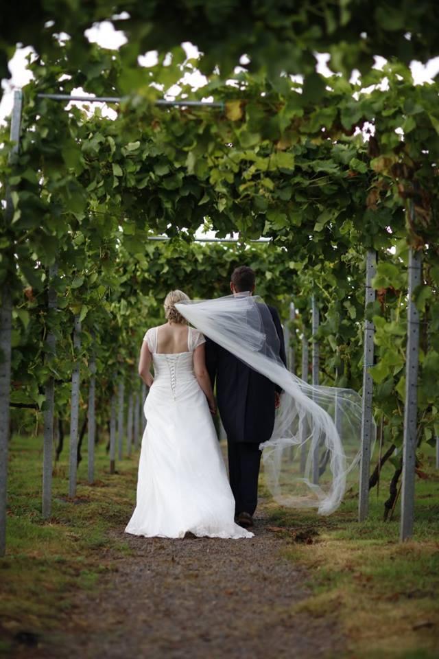 vineyard walk.jpg