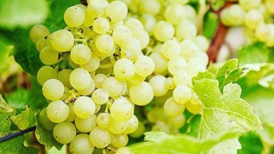wine+2.jpg